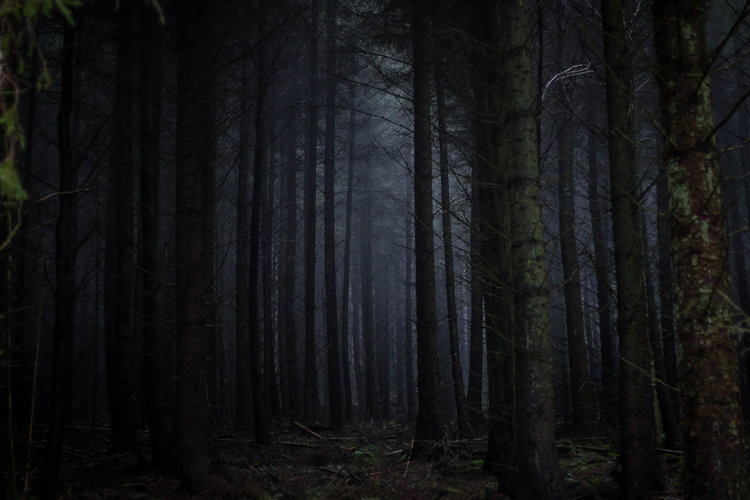 Image of dark forest