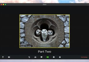 3 owls peering out a medieval stone window
