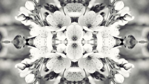 Mirrored black and white image of cherry blossom
